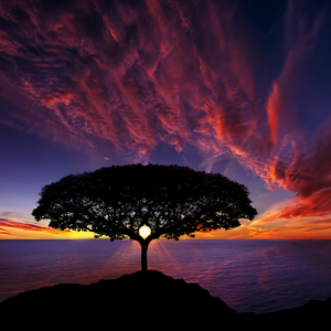 Rumi Image Tree of Life Bess Hamiti